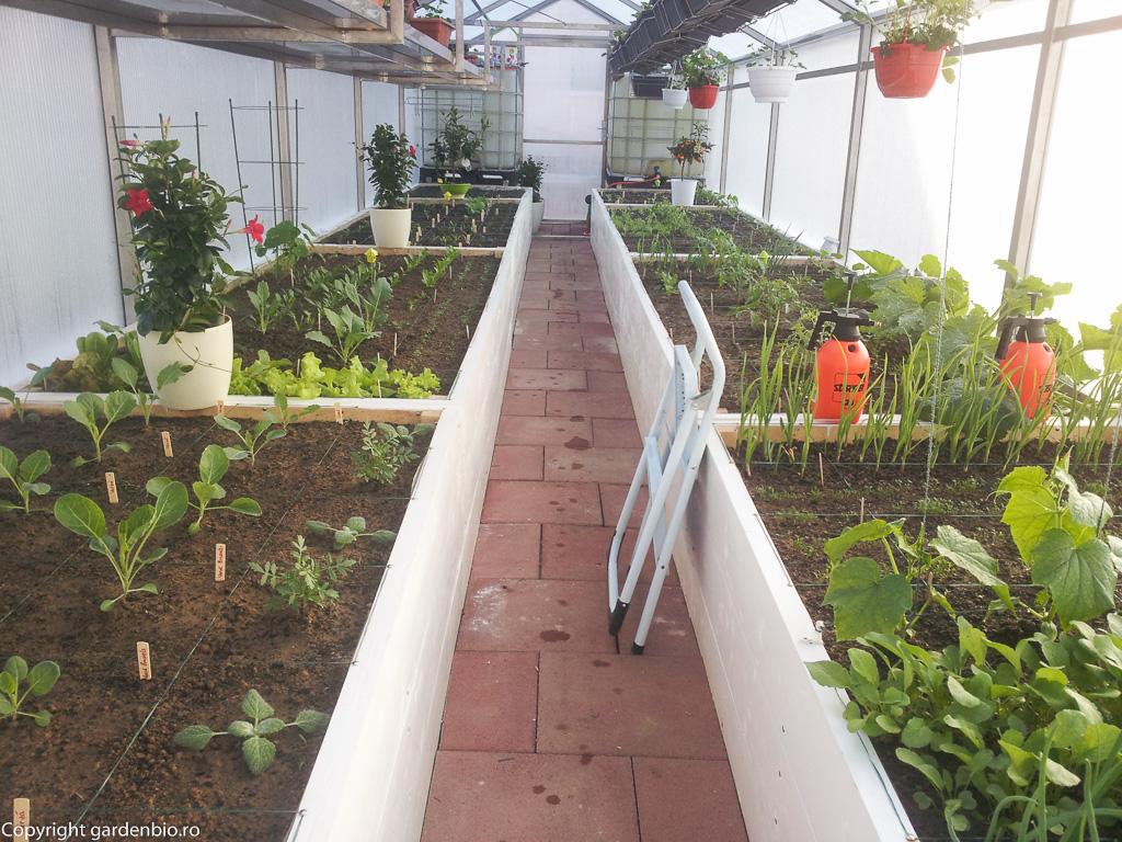 Plantele cresc repede in sera, desi afara inca temperaturile sunt scazute