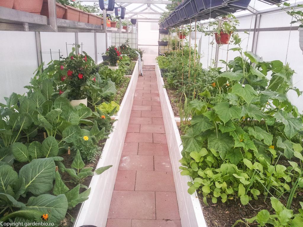 Primele recolte: ridichi, ceapa castraveti, salata, capsuni
