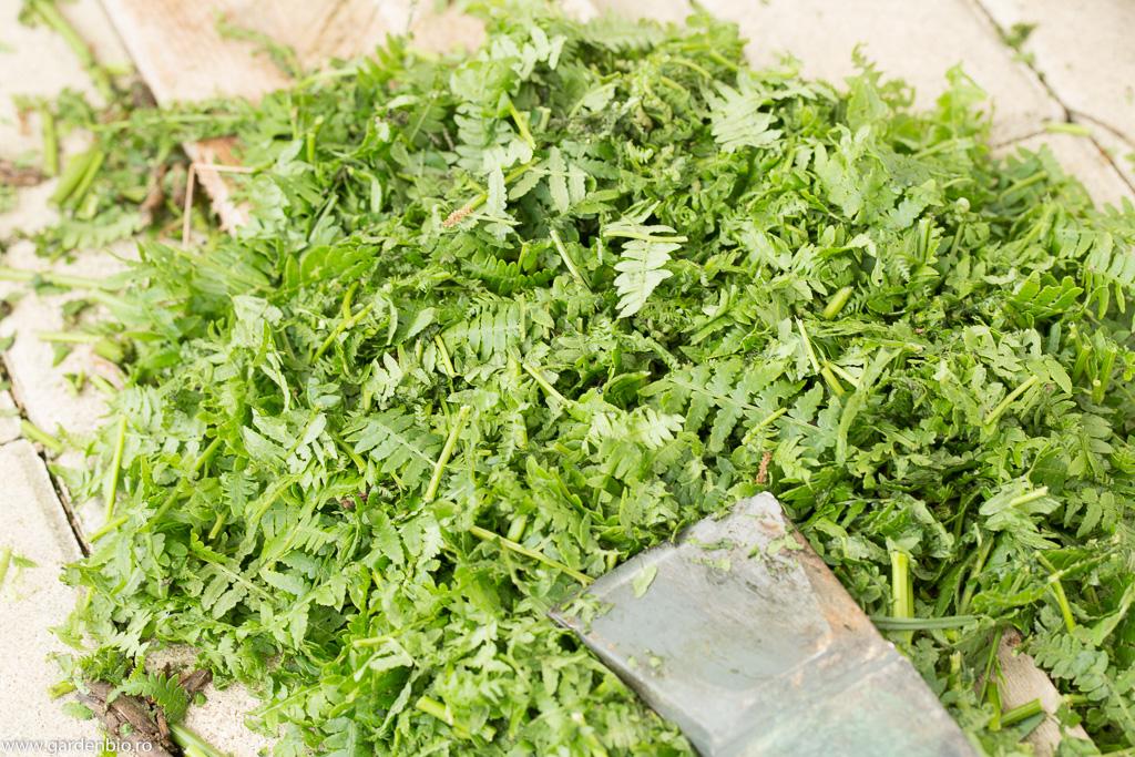 Feriga maruntita pentru extract vegetal