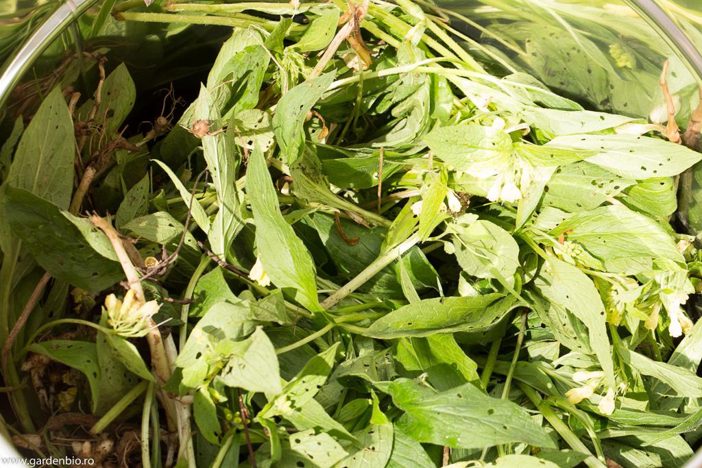 Tataneasa pentru extract vegetal