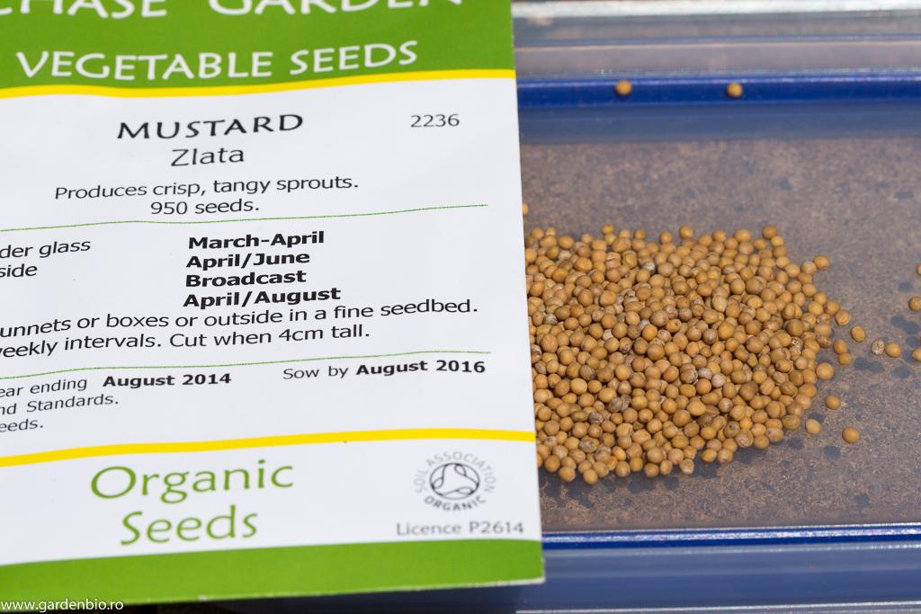 Seminte de mustar organic soiul Zlata, pentru germeni si vlastari