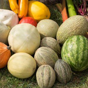 Semințe pepeni