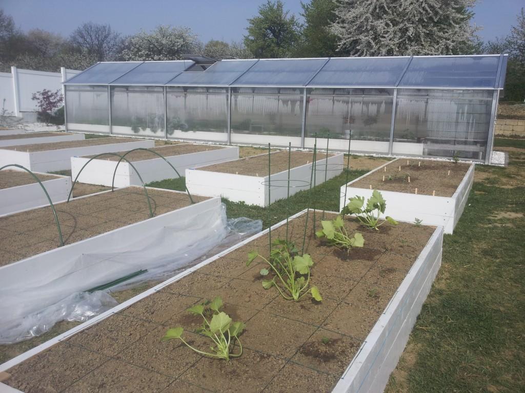 Primele legume plantate în grădină