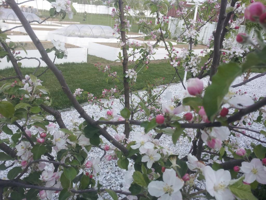 Grădina primăvara