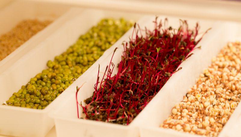 Semințe pentru germeni – gardenbio ro