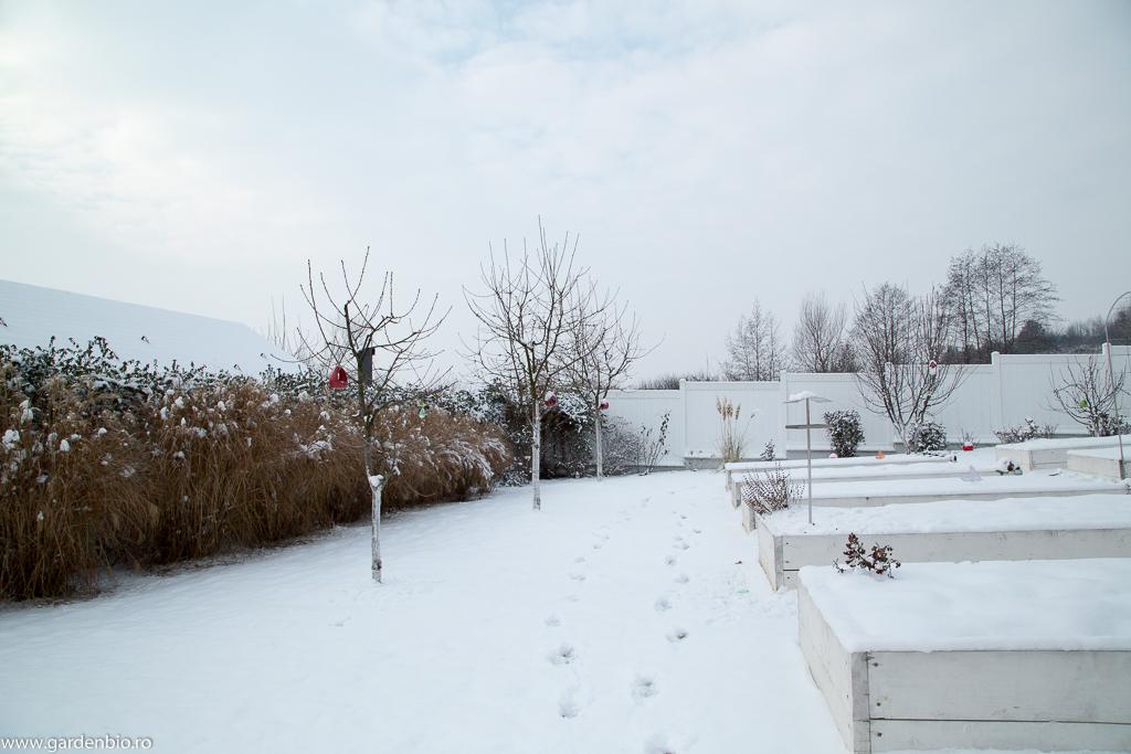 Gradina iarna