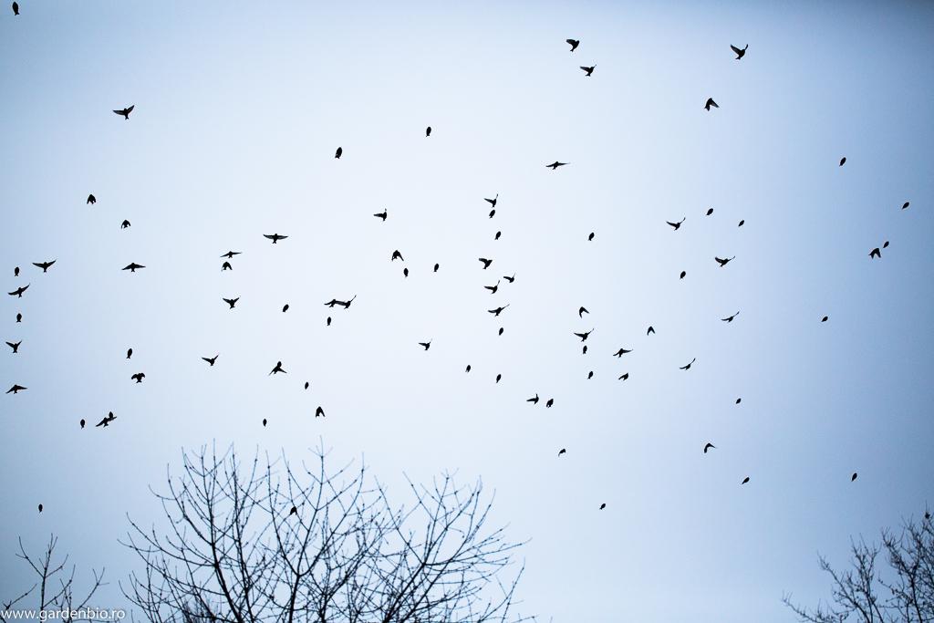 Stol de păsări iarna în zbor deasupra grădinii