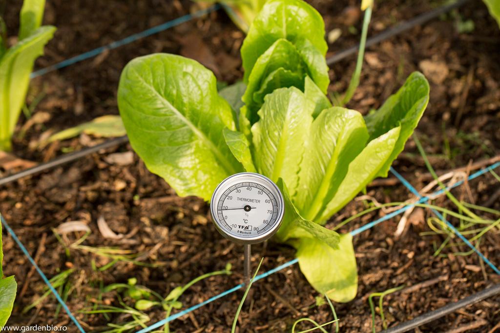 În stratul alăturat răsadniței din seră, temperatura solului este de doar 8 grade Celsius