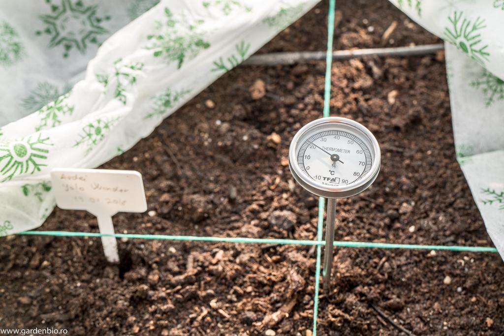 După 2-3 zile începe procesul de compostare și temperatura solului ajunge la peste 20 grade Celsius