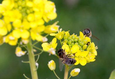Importanța polenizării plantelor