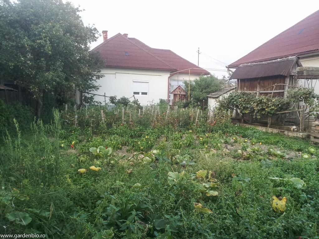 Grădina de la țară înainte
