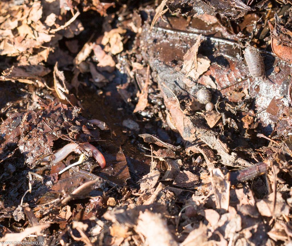 Mulci din frunze în stratul din grădină
