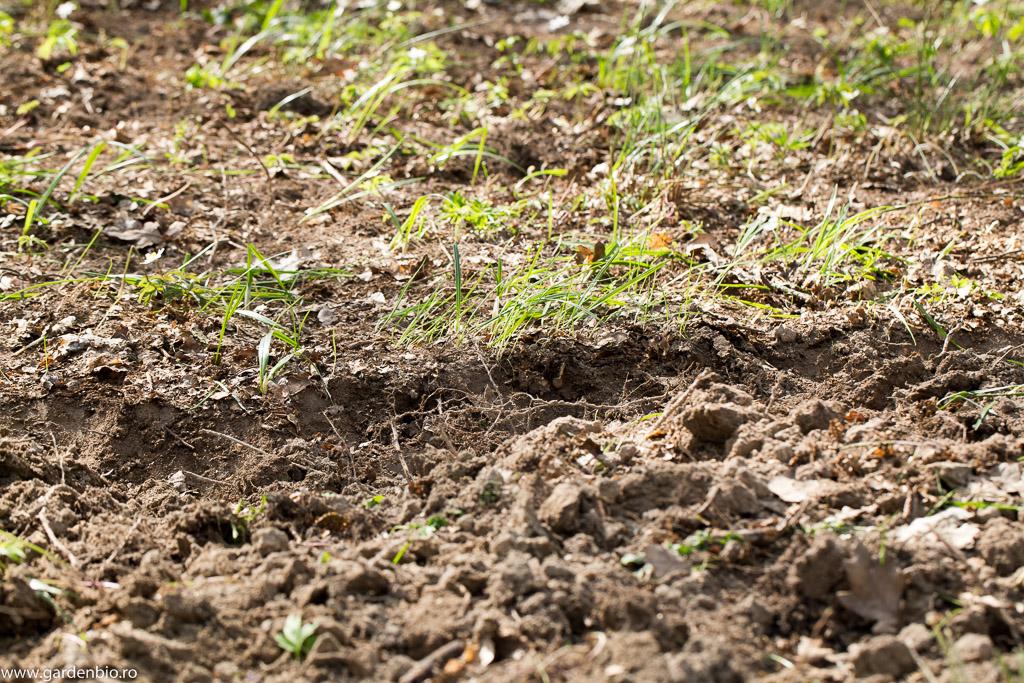 Am săpat primii 5-10 cm de sol din pădure pentru straturile din grădină