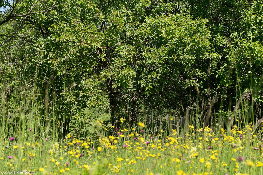 Roiul de albine se va așeza pe creanga unui copac