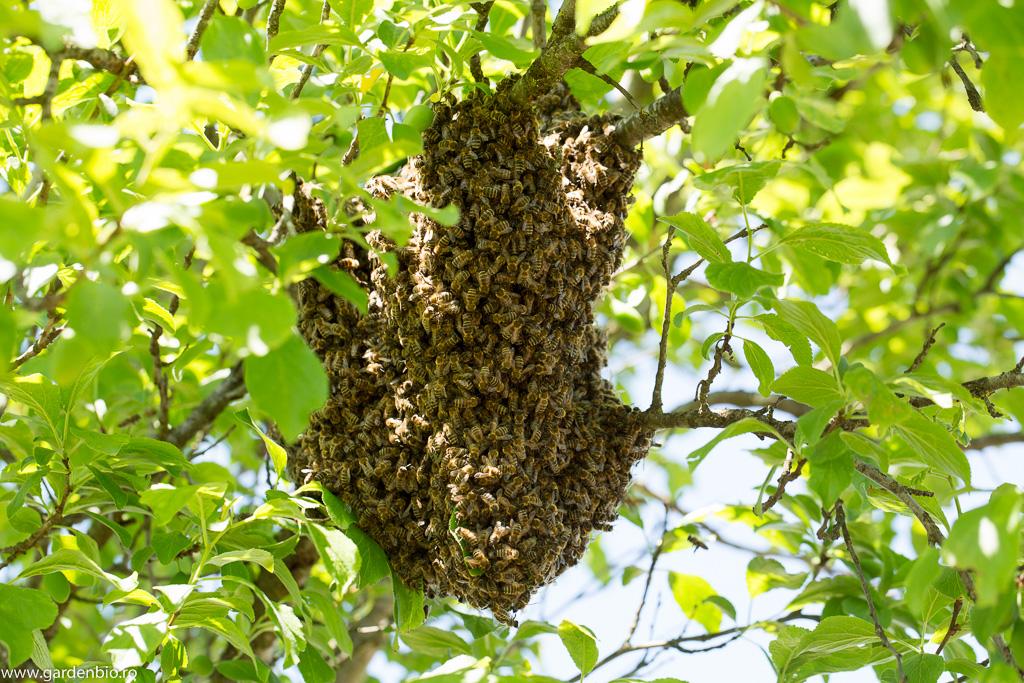 Al 2-lea roi de albine în copac