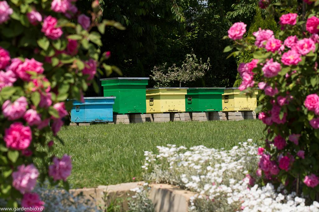 Stupii cu albinele din grădină mea ecologică, care asigură polenizarea fructelor și legumelor