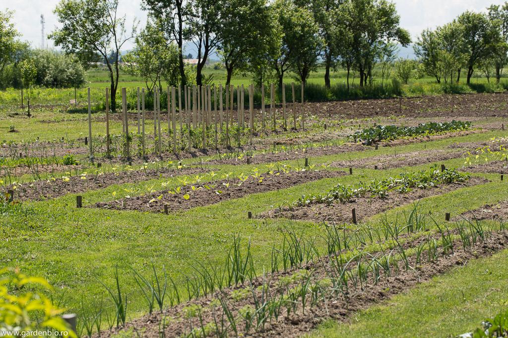 Straturi cu ceapă, morcovi, vinete, ardei, brocoli, varză, gulii etc