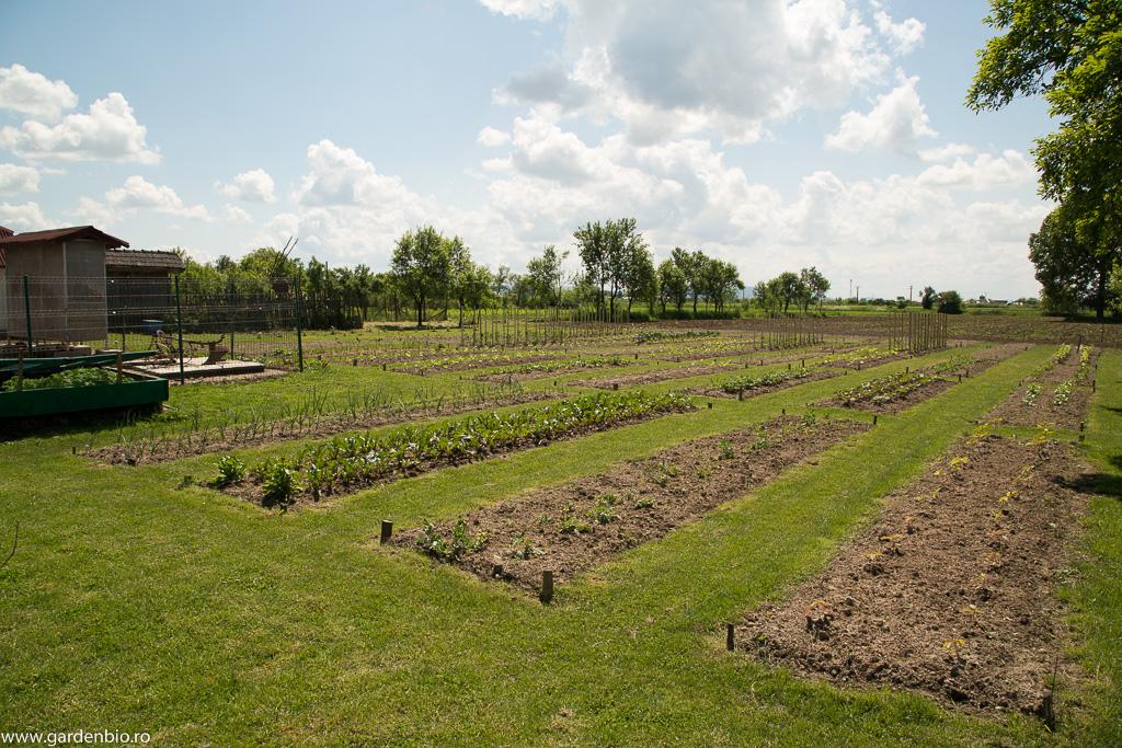 Se conturează grădina de la țară, primăvara 2016
