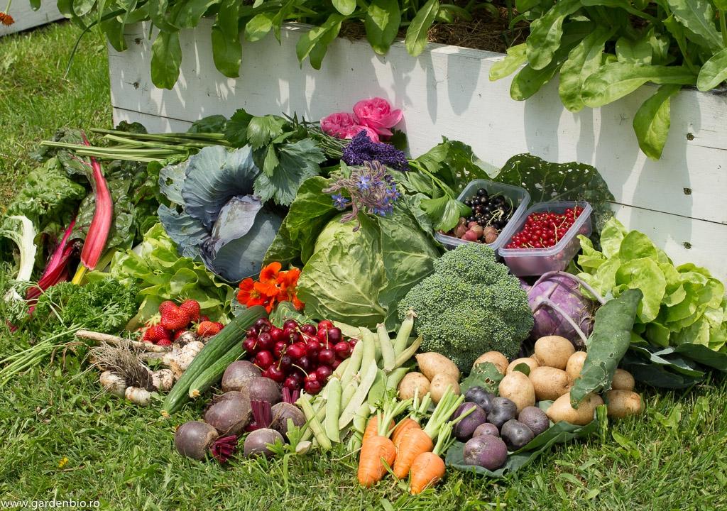 Recoltă din grădină în iunie