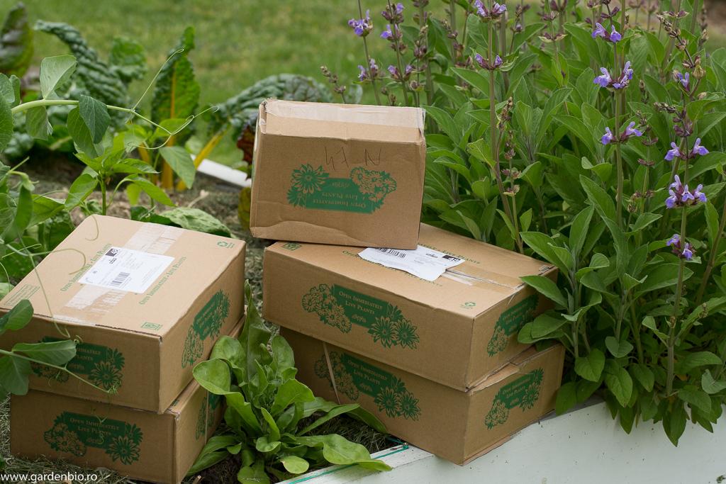 Cutiile cu plantele noi pentru grădină