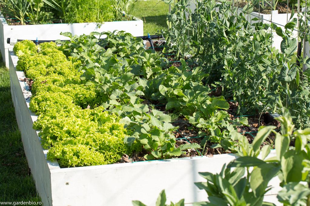 Strat cu salată și ridichi primăvara devreme