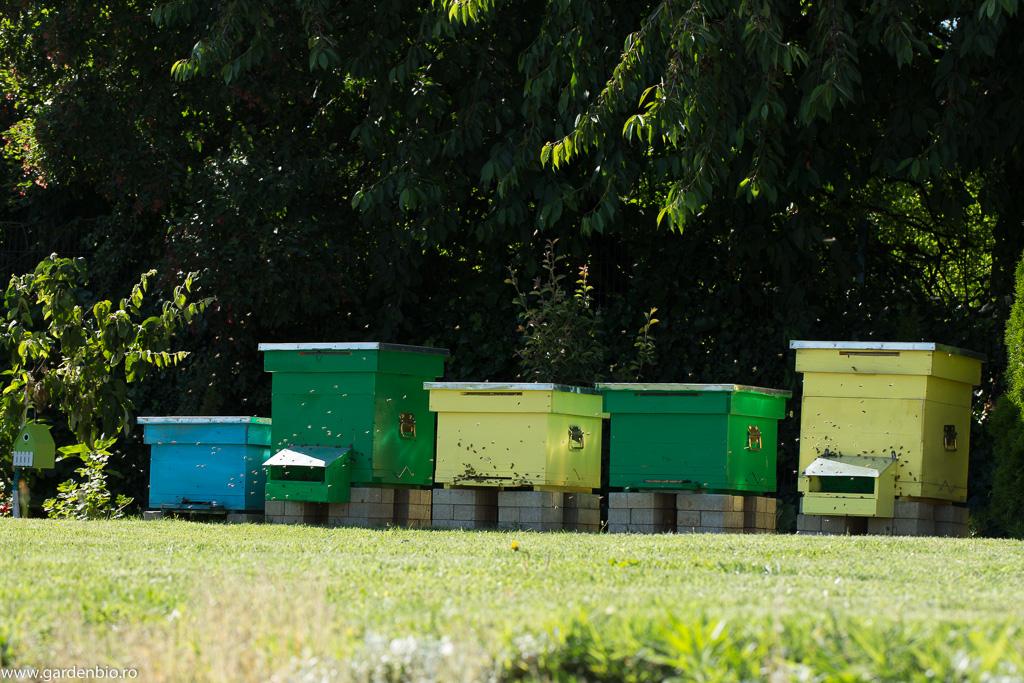 Albinele din stupi, pe lângă mierea și polenul pe care mi le oferă, asigură și polenizarea plantelor și pomilor fructiferi din grădină