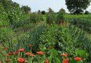 Grădina de la țară în iunie