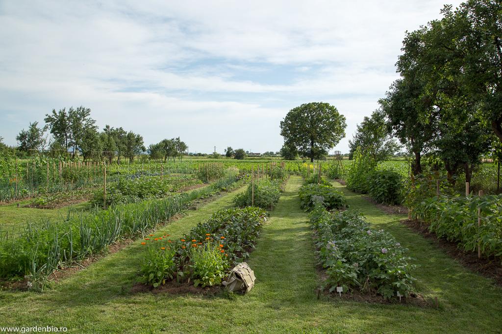 Grădina la început de iunie