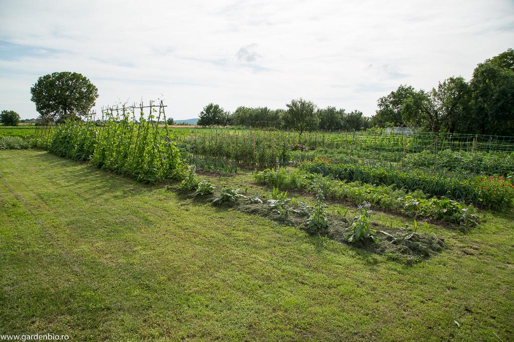 Stratul cu anghinare din grădina de la țară