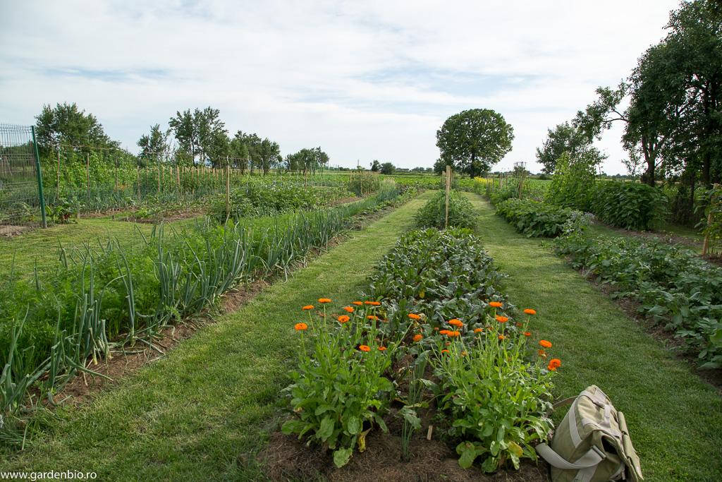 Grădina de la țară la început de iunie