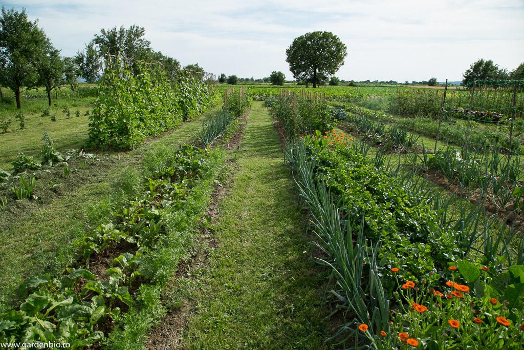 Strat cu morcovi Muscade și sfeclă în grădina de la țară