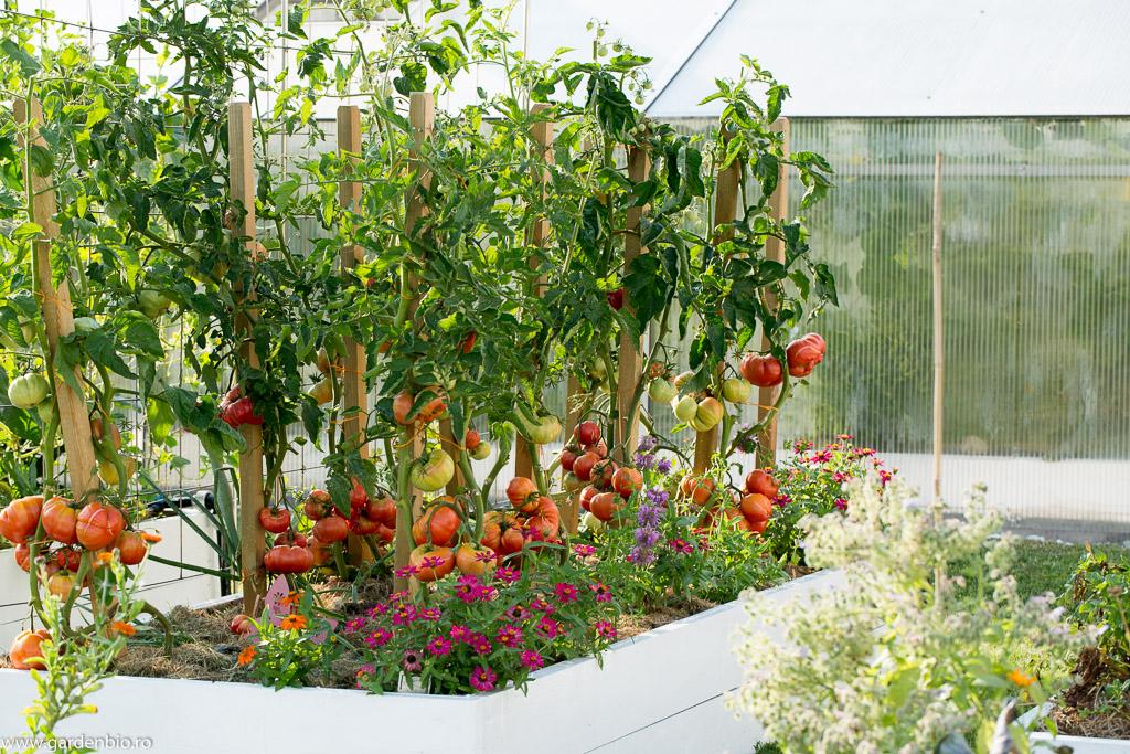 Cârciumăresele - companionii preferați în grădina de legume din acest sezon