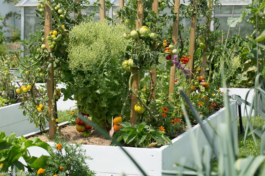 Strat cu roșii, cârciumărese Profusion Orange, roiniță și salată înflorită pentru semințe