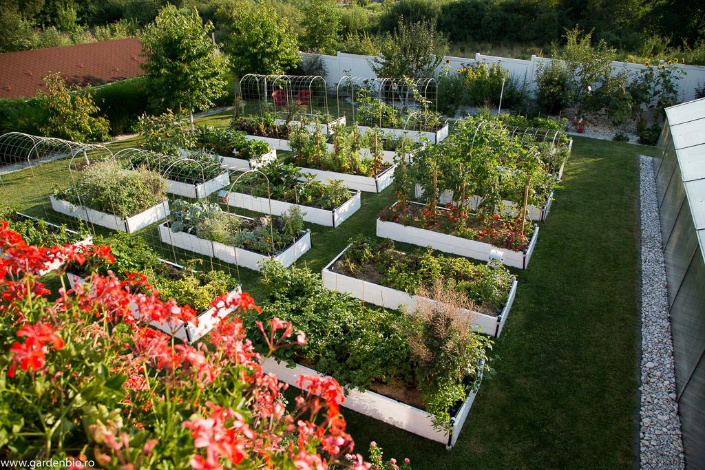 Grădina la sfârșitul lunii iulie, cu cele 18 straturi raised beds de legume