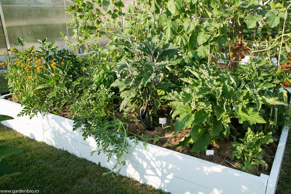 Strat cu vinete, pepene roșu, castraveți și gălbenele