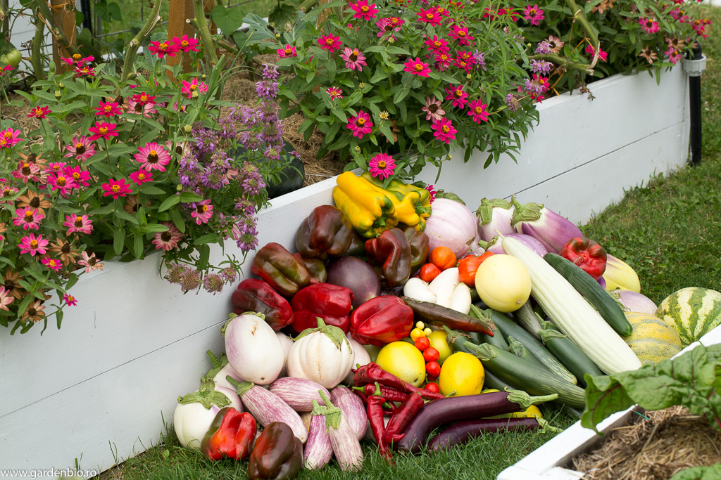 Recoltă din grădină