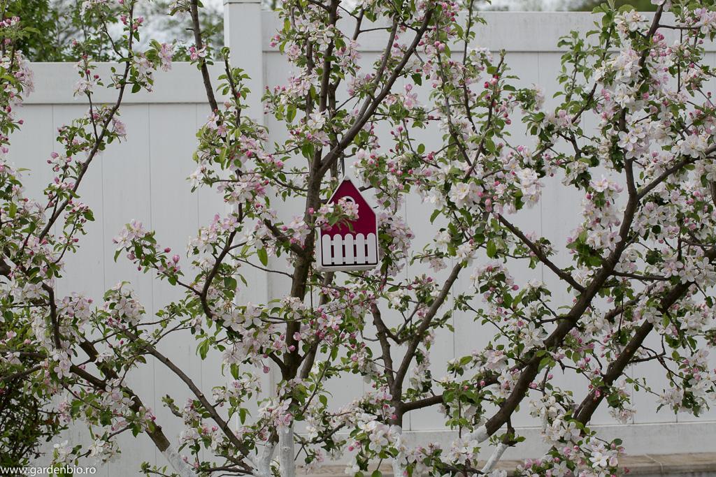 Florile de măr oferă din belșug polen și nectar albinelor, acestea în schimb le polenizează, ajutând astfel la perpetuarea speciei, precum și la obținerea de recolte mari și mai sănătoase