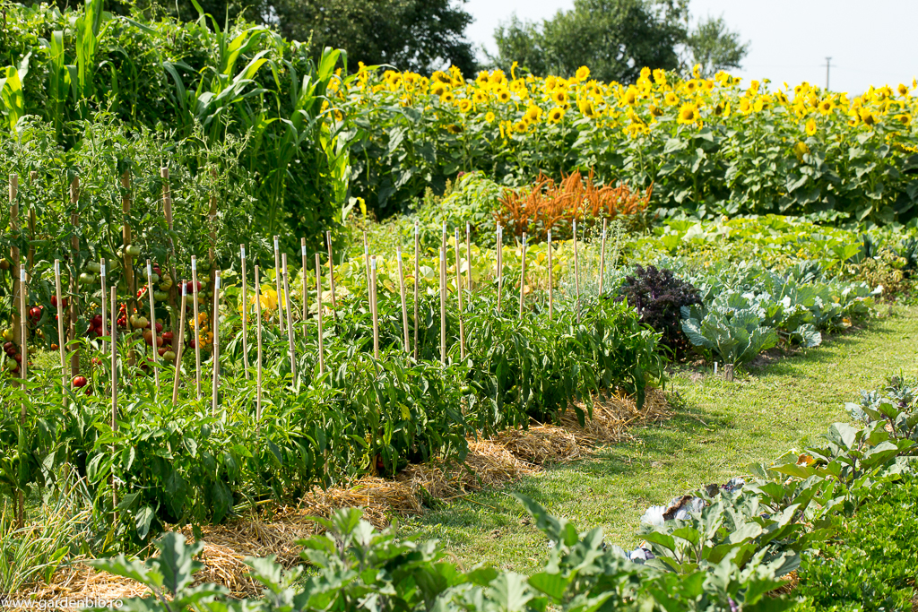 Grădina de la țară în 2016