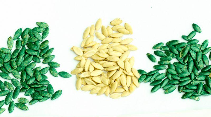 Semințe tradiționale sau hibrid și GMO ?