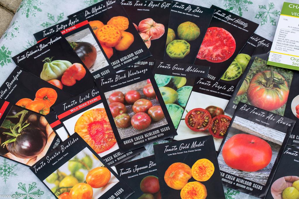 Seminţe de roşii heirloom (tradiţionale) netratate sau modificate genetic