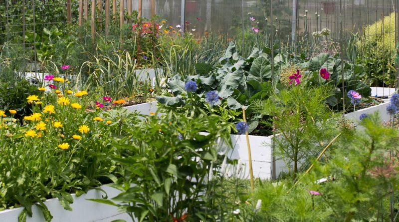 Jurnal de grădină – iunie 2017