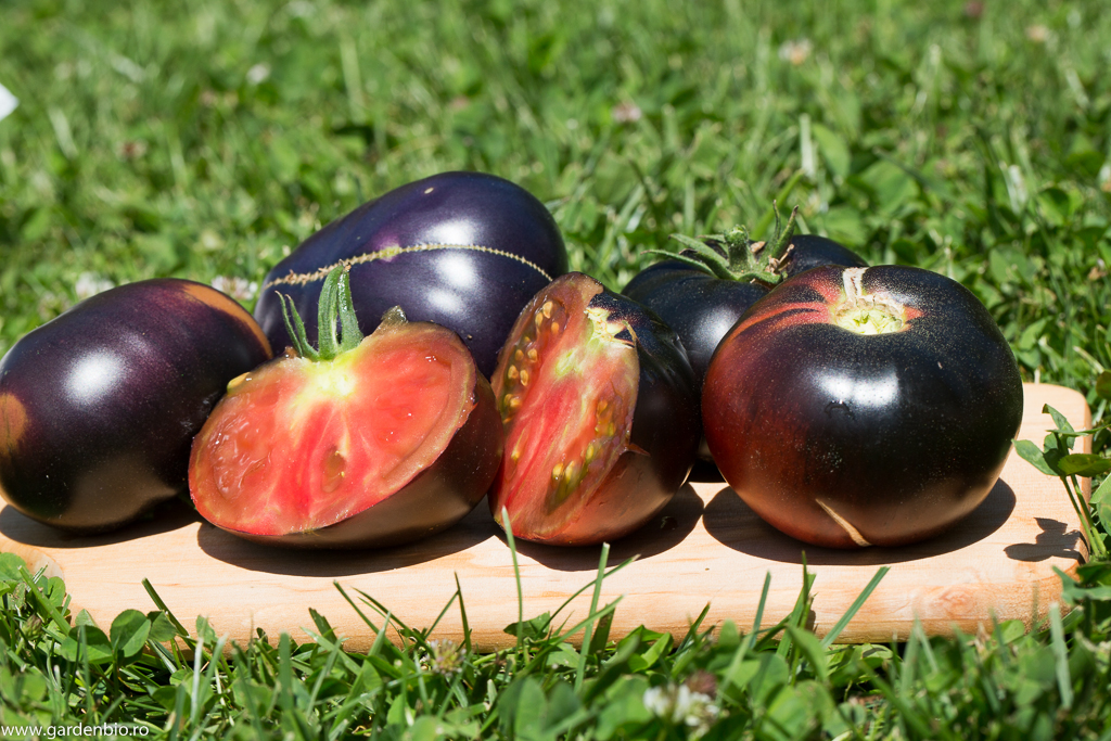 Tomate Black Beauty