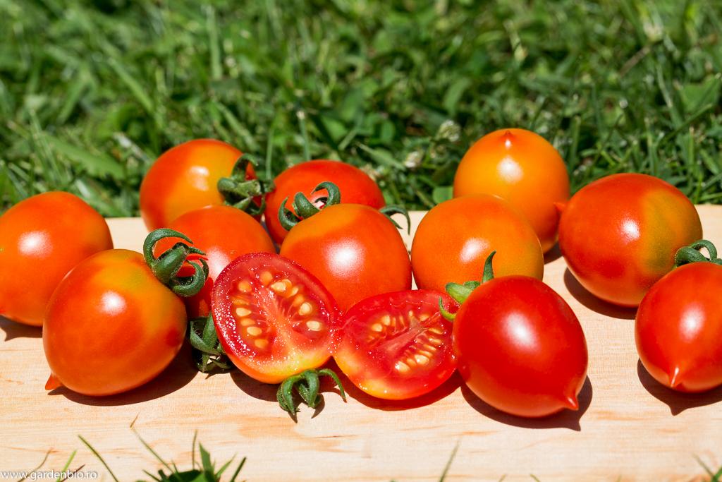 Tomate Grappoli D'Inverno