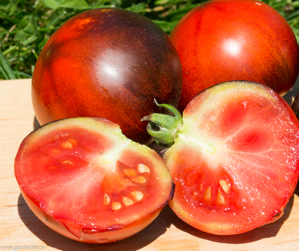 Tomate Indigo Apple