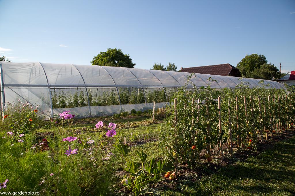 Cosmos pentru atragerea polenizatorilor