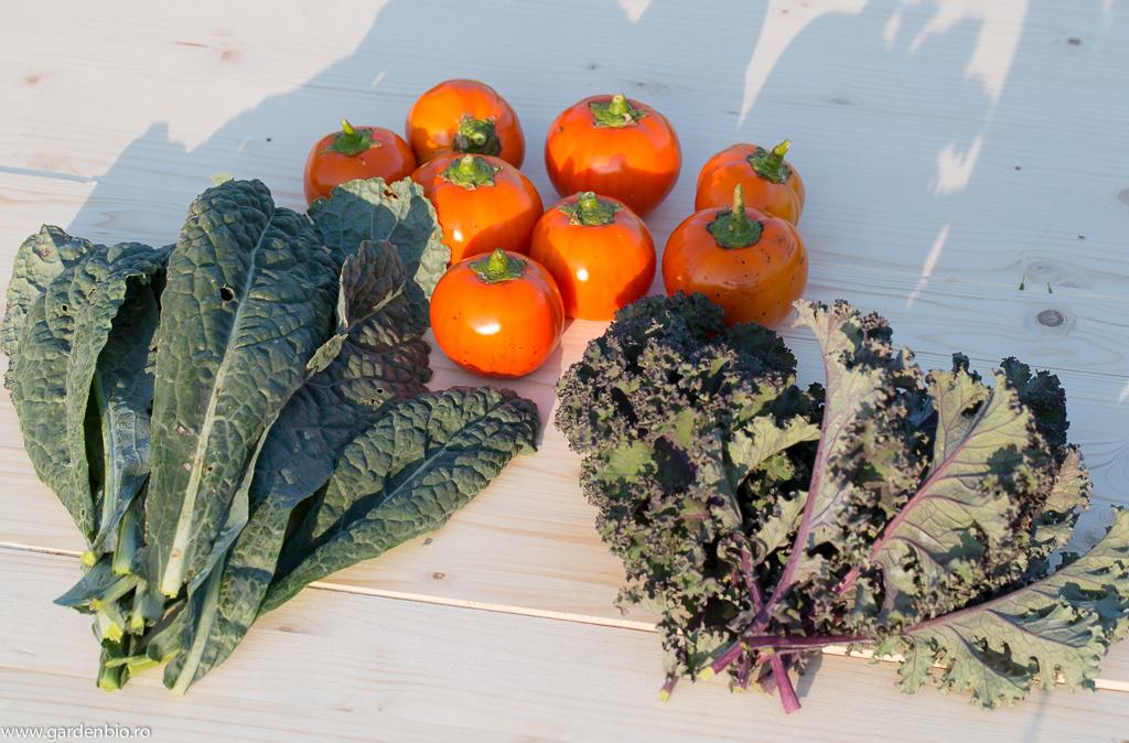 Kale Nero di Toscana, Red Curled şi vinete Melanzane Rosso Di Rotonda