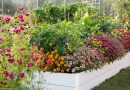 Grădinăritul biointensiv