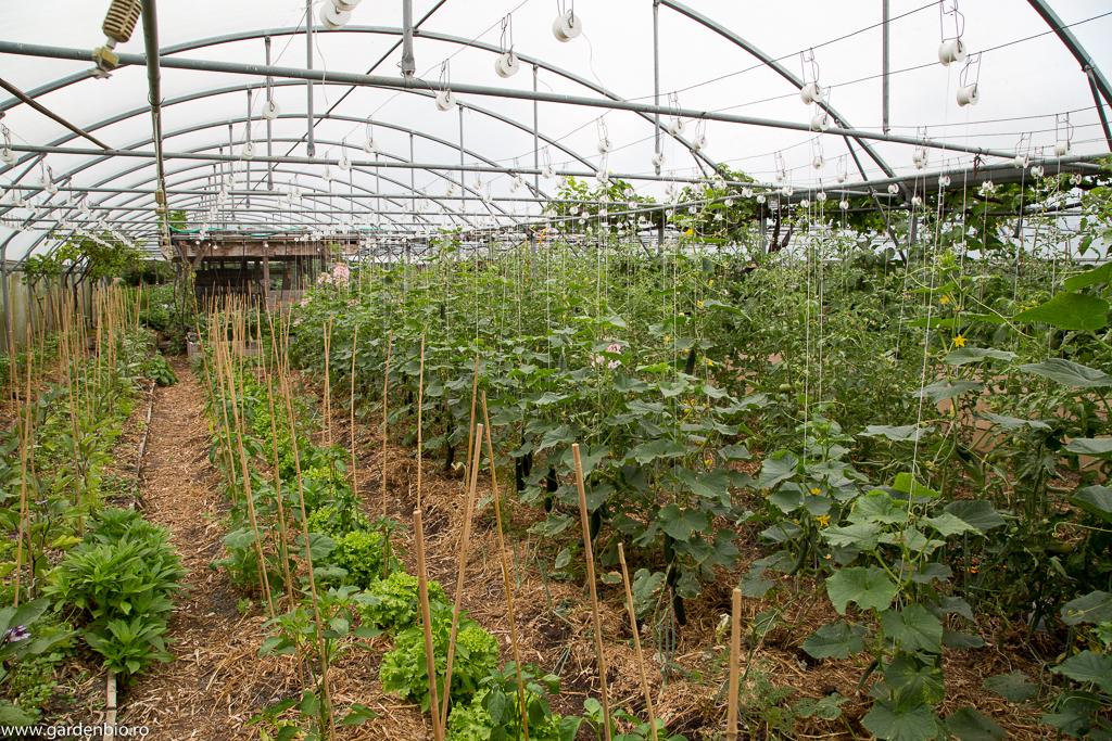 Culturi intercalate pentru valorificarea la maxim a straturilor din solar - castraveţi cu ceapă, ardei cu salată