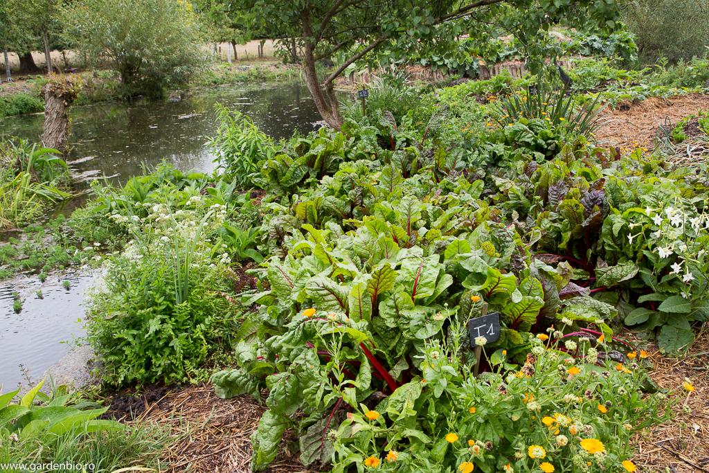 Gălbenele, mangold, regina nopţii şi multe plante de apă în jurul iazului