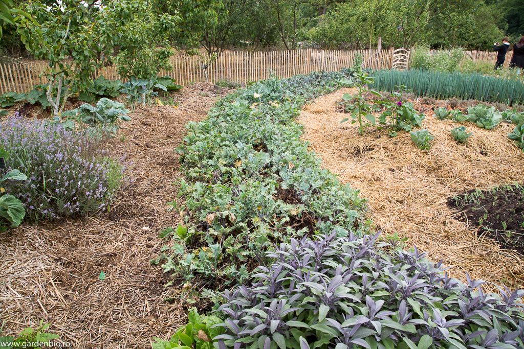 Kale, salvie, lavandă, ceapă etc. în straturile din grădina Mandala, totul este mulcit cu paie